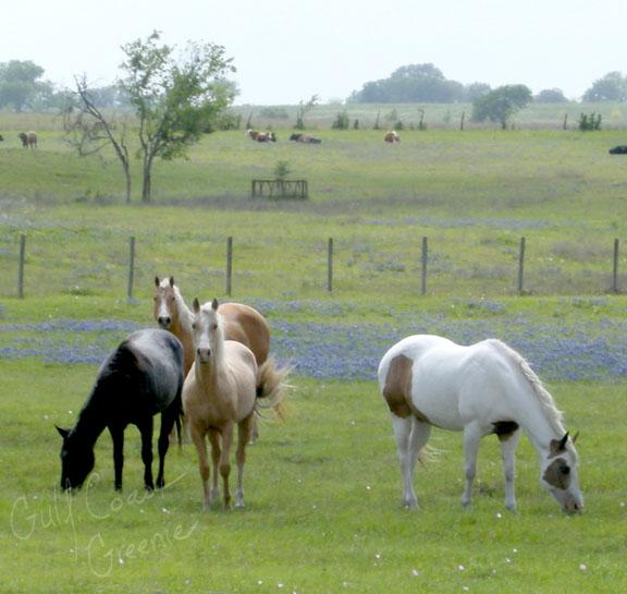 Horses_cr